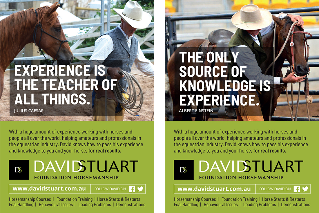 David stuart horse Deals adverts